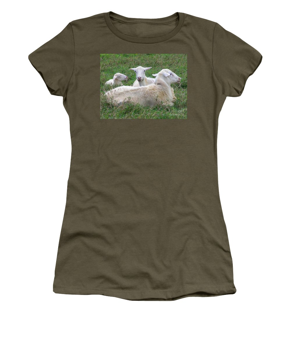 White Animals Women's T-Shirt featuring the photograph Goat Family by Mary Deal