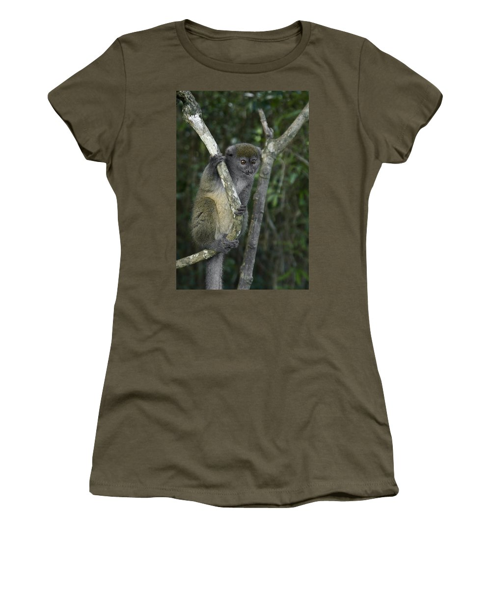 Madagascar Women's T-Shirt featuring the photograph Gray Bamboo Lemur by Michele Burgess