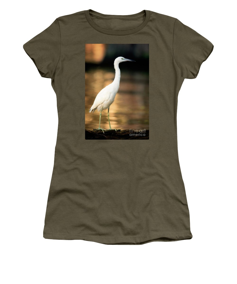 Immature Little Blue Heron Women's T-Shirt featuring the photograph Immature Little Blue Heron by Matt Suess