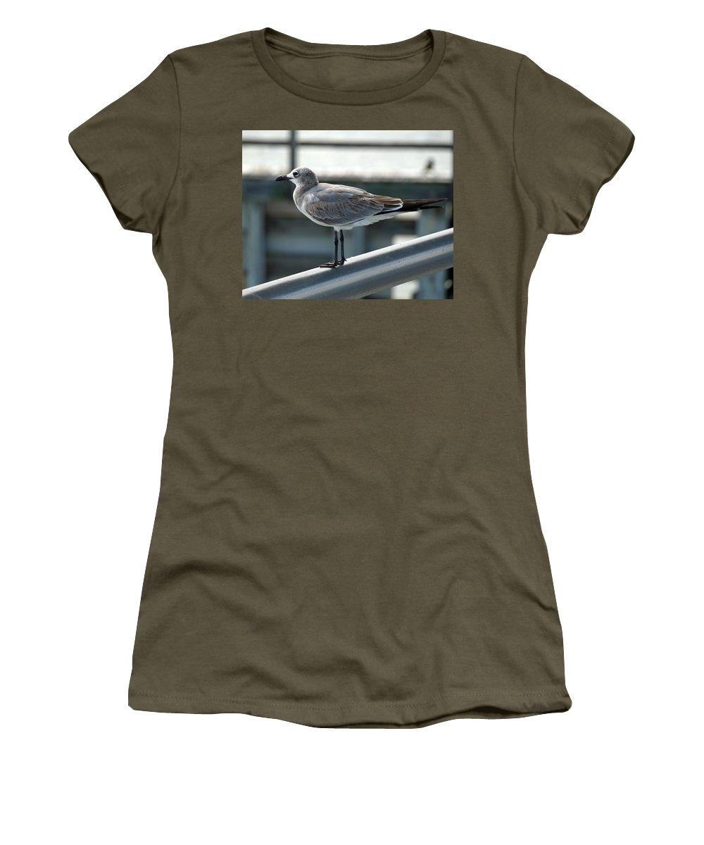 Laughing; Gull; Seagull; Bird; Waterfowl; Seashore; Sebastian; Inlet; Flying; Florida; Larus; Atrici Women's T-Shirt featuring the photograph Laughing Gull by Allan Hughes