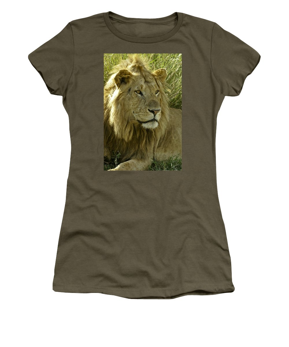 Lion Women's T-Shirt featuring the photograph Nice Kitty by Michele Burgess