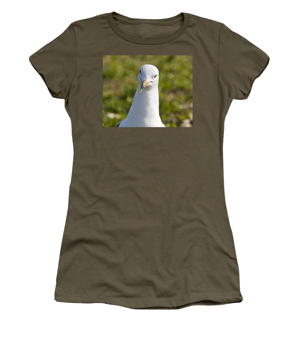 Larus Women's T-Shirt (Athletic Fit) featuring the photograph Ring-billed Gull by Allan Hughes