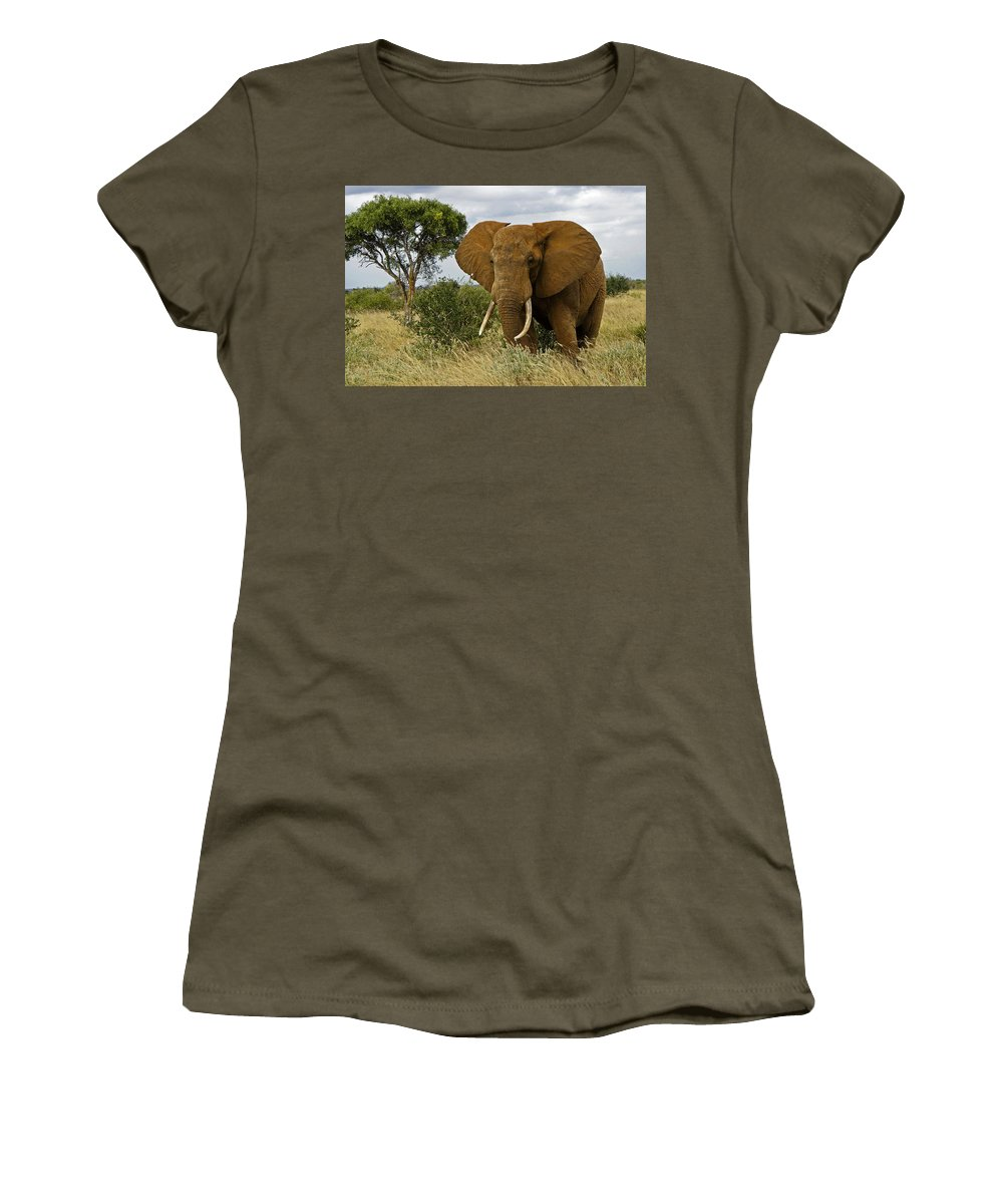 Africa Women's T-Shirt featuring the photograph The Old Bull by Michele Burgess