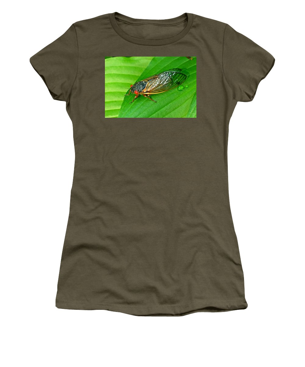 17 Women's T-Shirt (Athletic Fit) featuring the photograph 17 Year Periodical Cicada by Douglas Barnett