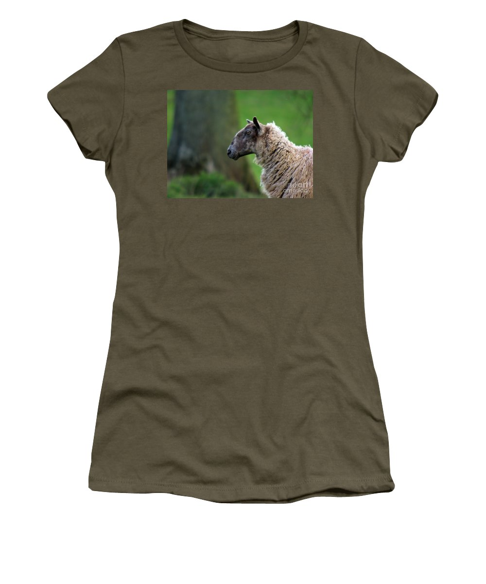 Sheep Women's T-Shirt (Athletic Fit) featuring the photograph Baa Baa by Angel Ciesniarska