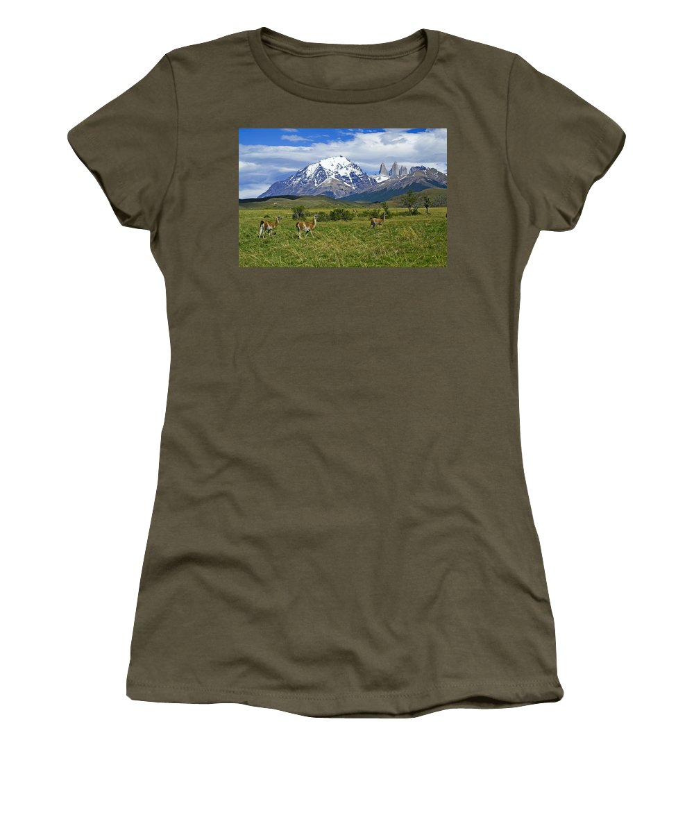 Patagonia Women's T-Shirt featuring the photograph Guanacos In Torres Del Paine by Michele Burgess