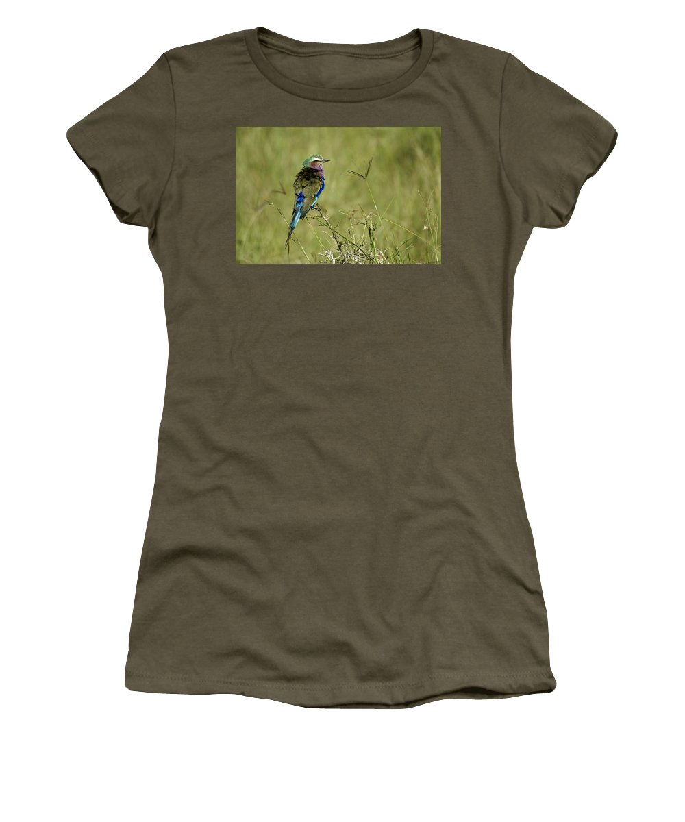 Africa Women's T-Shirt featuring the photograph Lilac-breasted Roller by Michele Burgess