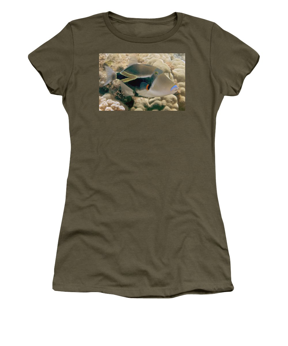 Attack Women's T-Shirt featuring the photograph Picasso Triggerfish by Dave Fleetham - Printscapes