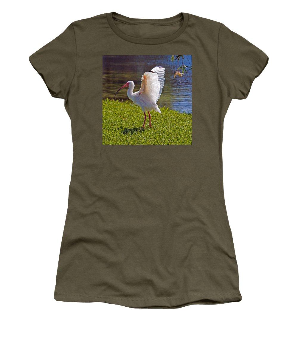 Ibis; White; Bird; Florida; Frog; Pollywogs; Pond; Seabird; Shore; Coast; Water; Fowl; Waterfowl; Fe Women's T-Shirt featuring the photograph White Ibis by Allan Hughes