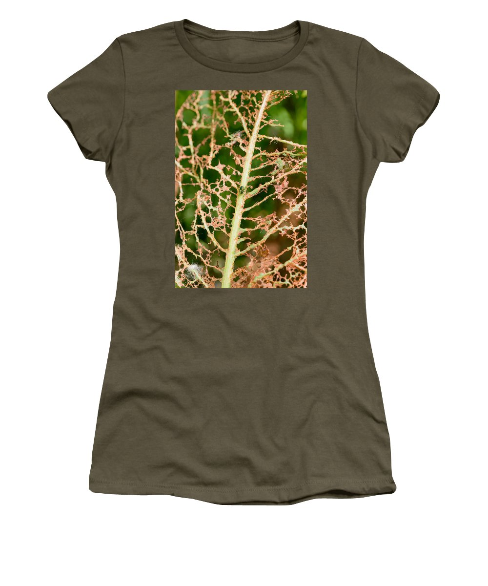 Beetle Women's T-Shirt featuring the photograph Leaf Eaten By Insects by Alain De Maximy