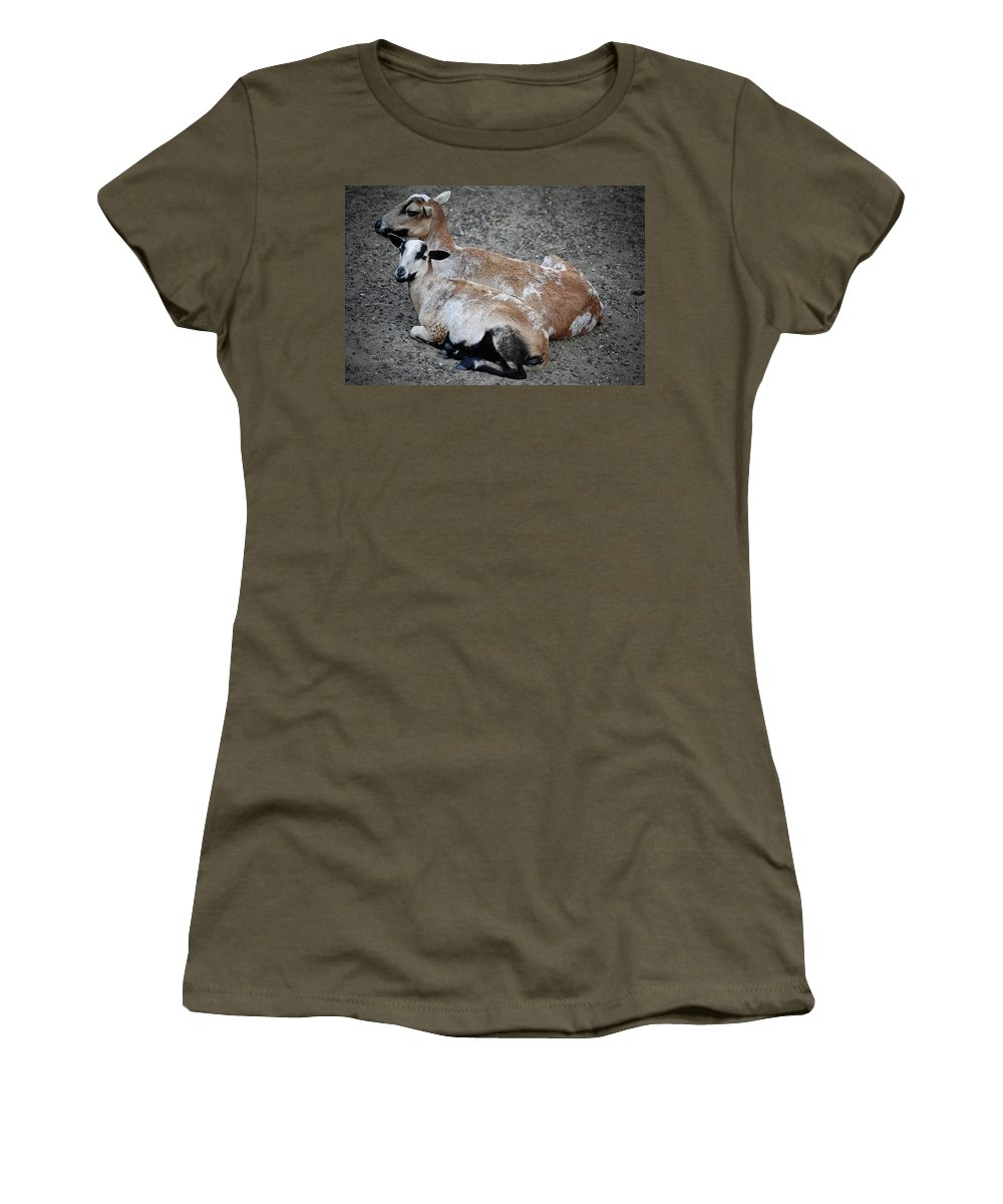 Goats Women's T-Shirt featuring the photograph A Nanny And Her Kid by DigiArt Diaries by Vicky B Fuller