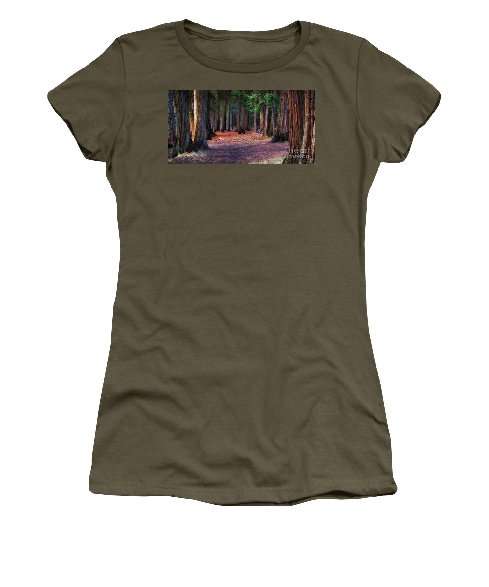 Yosemite National Park Women's T-Shirt featuring the photograph A Path Of Redwoods by Anthony Bonafede
