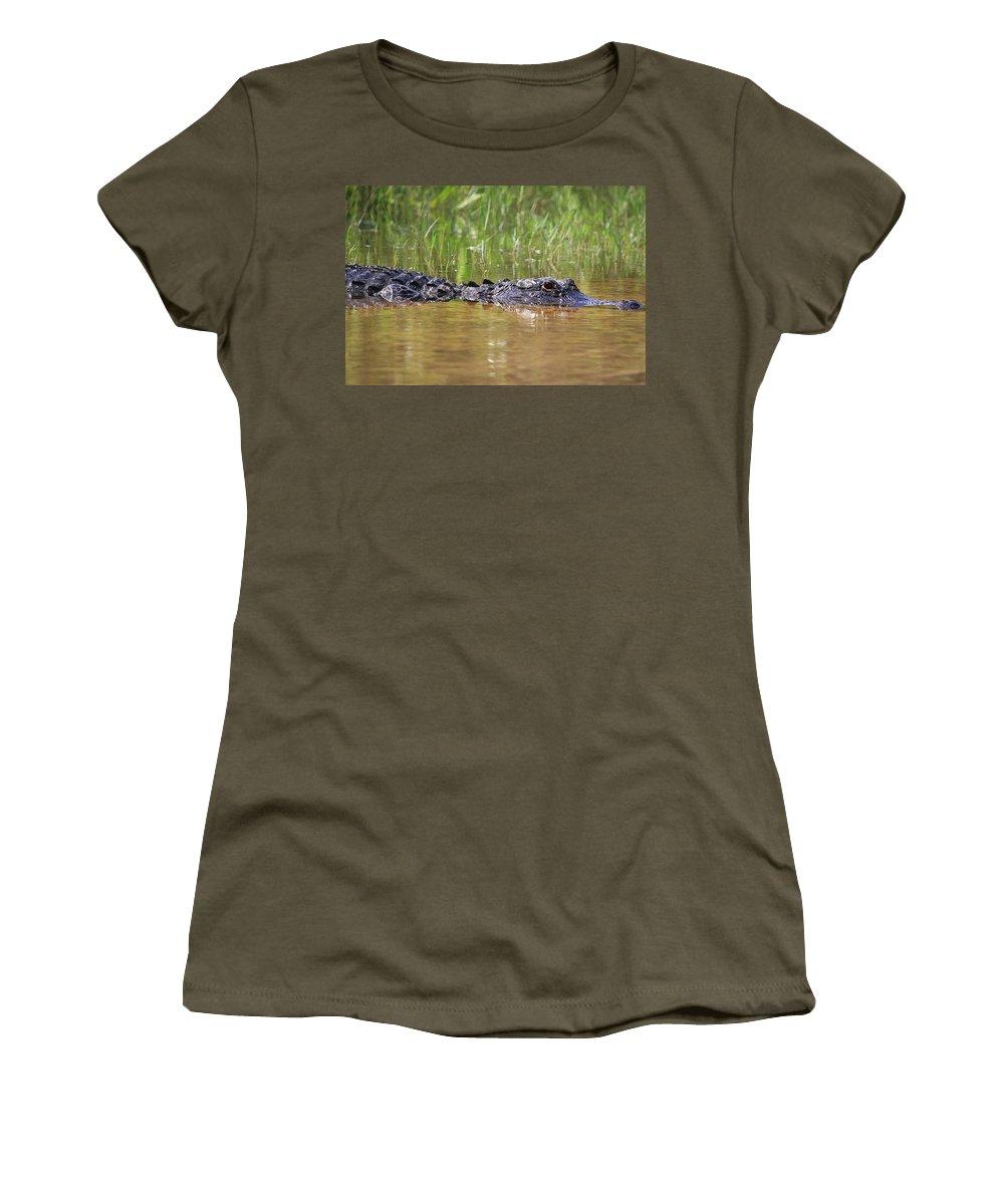 Alligator Women's T-Shirt featuring the photograph Alligator by Dennis Goodman