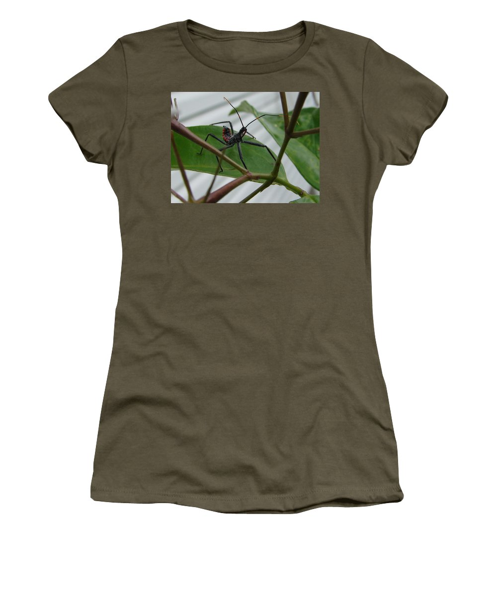 Insect Red Black Green Leaf Women's T-Shirt (Athletic Fit) featuring the photograph Assassin Bug by Luciana Seymour