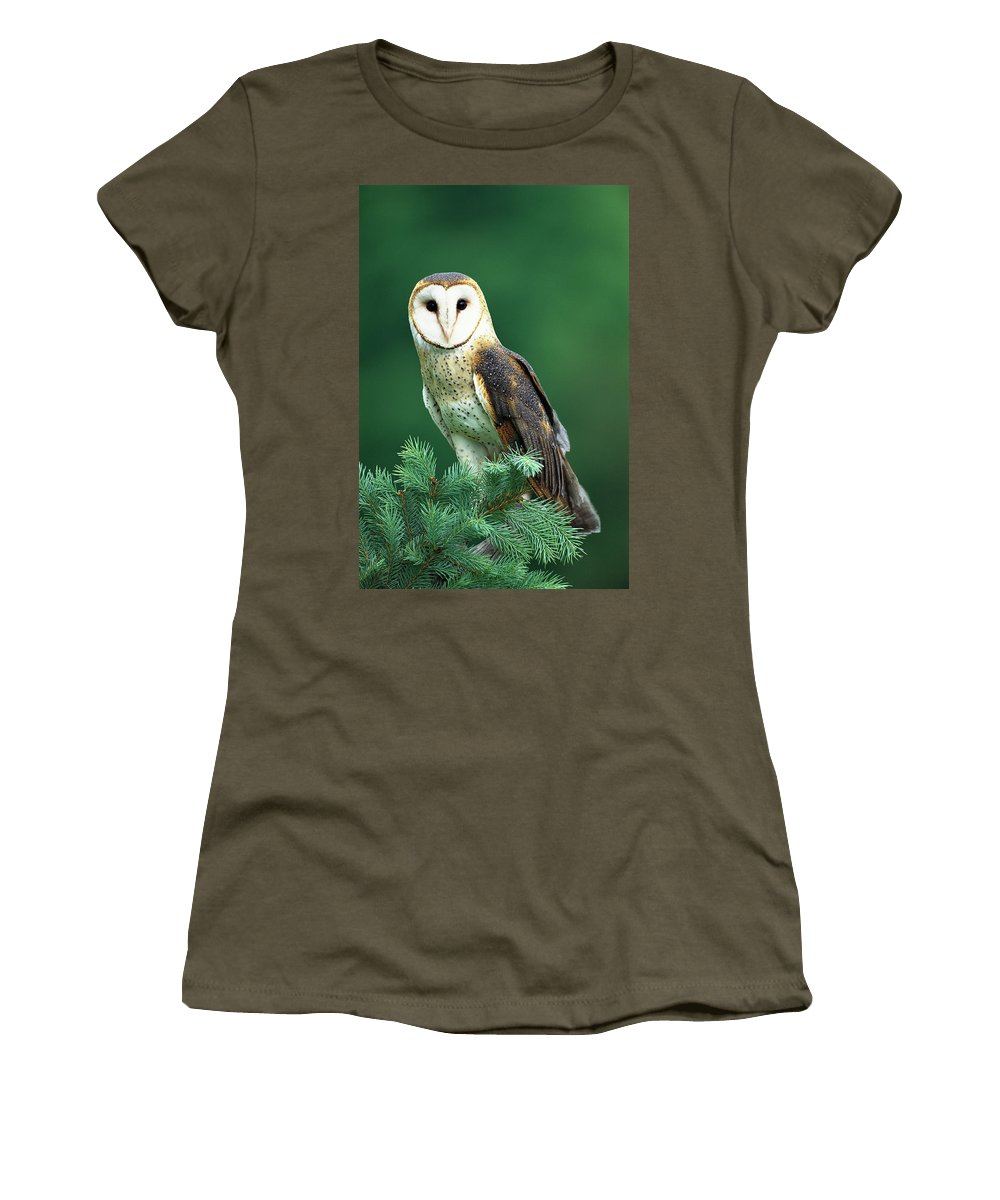 Mp Women's T-Shirt featuring the photograph Barn Owl Tyto Alba Portrait, Hudson by Tom Vezo