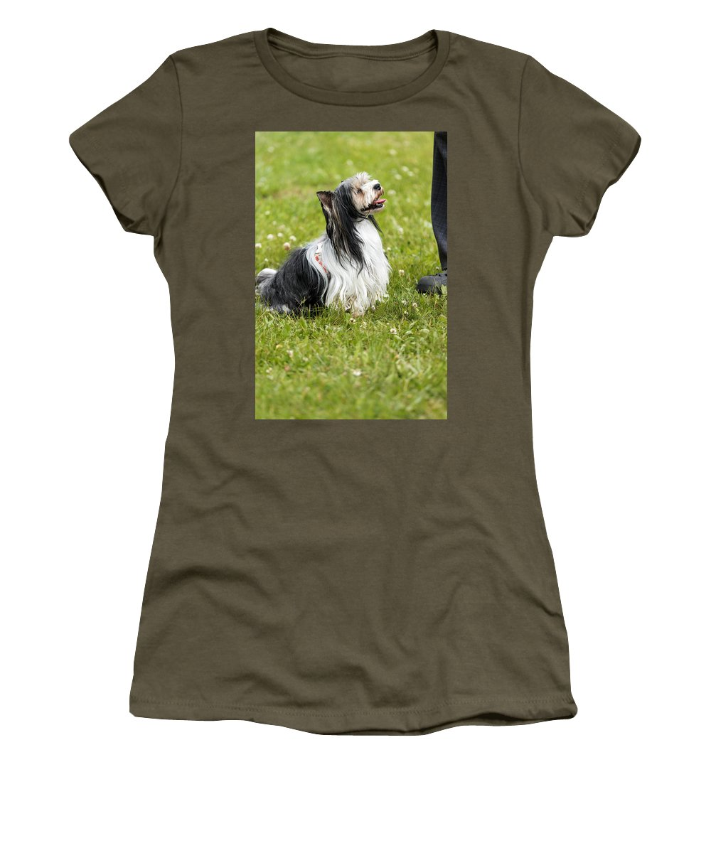 Biewer Yorkshire Terrier Women's T-Shirt featuring the photograph Biewer Yorkshire Terrier Is Looking Up At His Master by Jaroslav Frank