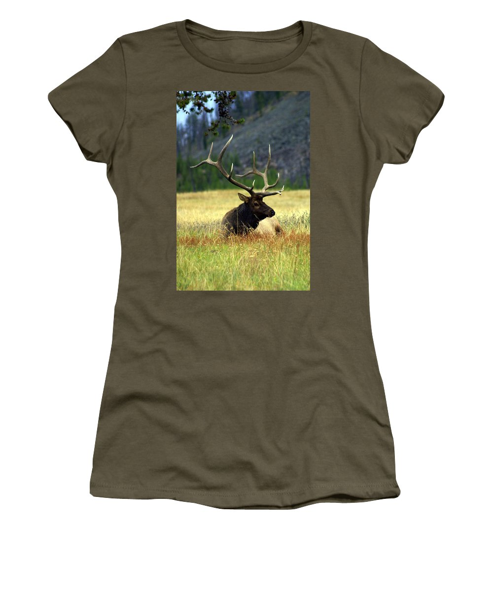 Women's T-Shirt featuring the photograph Big Bull 2 by Marty Koch