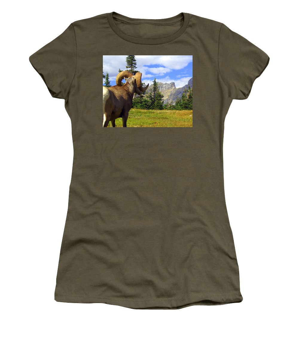 Glacier National Park Women's T-Shirt (Athletic Fit) featuring the photograph Big Horn 3 by Marty Koch