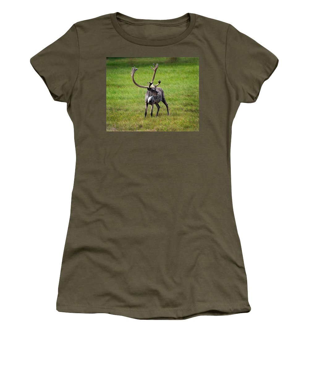 Caribou Women's T-Shirt (Athletic Fit) featuring the photograph Big Horn by Anthony Jones