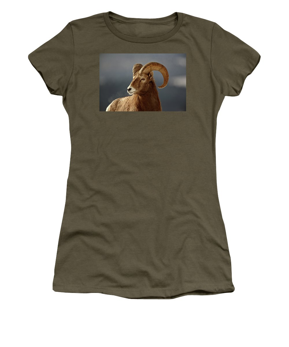 Rocky Mountain Women's T-Shirt featuring the digital art Bighorn Sheep In Winter by Mark Duffy