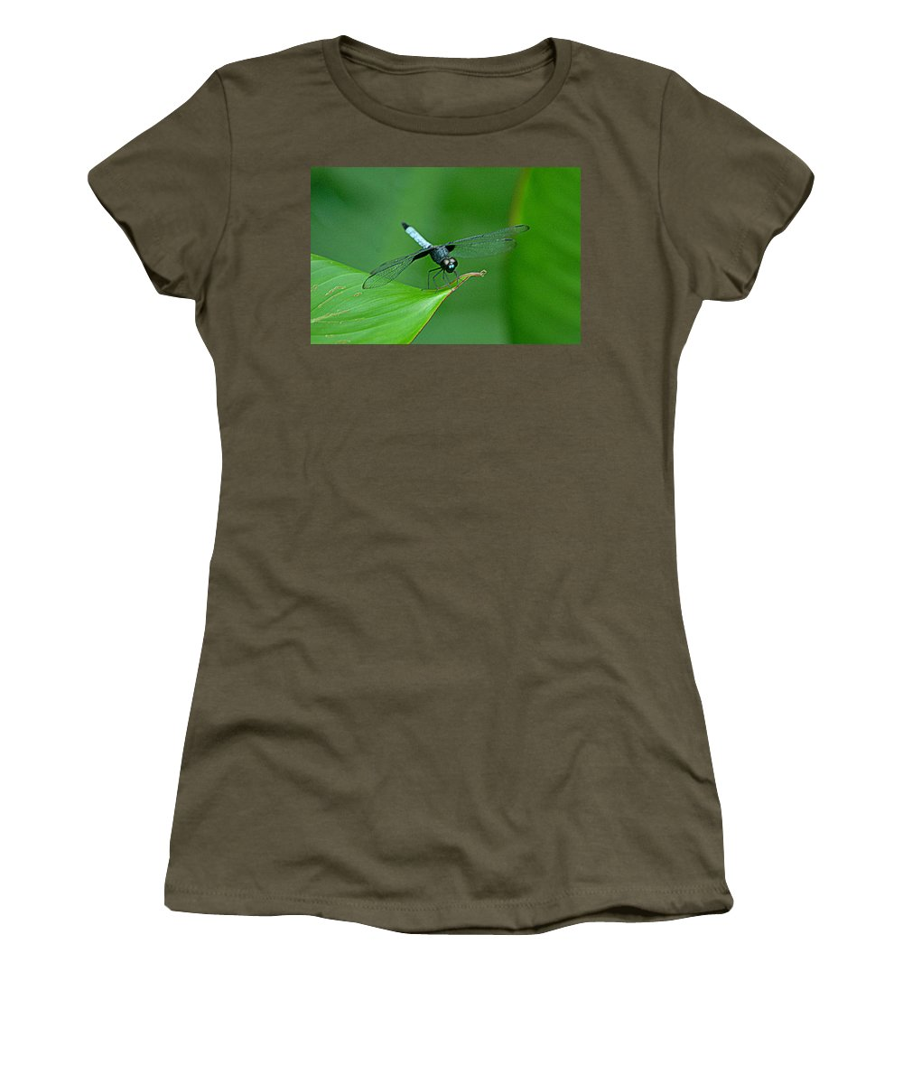 Libelula Women's T-Shirt (Athletic Fit) featuring the photograph Black And Blue Dragonfly by HQ Photo