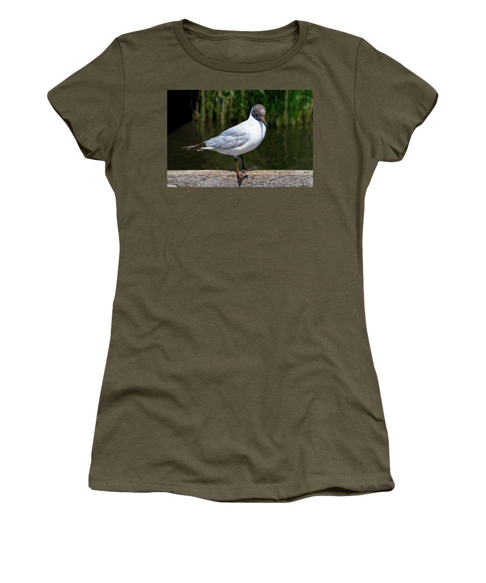 Black-headed-gull Women's T-Shirt featuring the photograph Black-headed Gull - Larus Ridibundus by Susie Peek