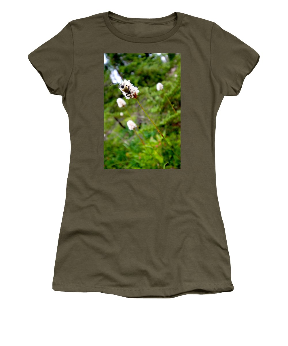 Adventure Women's T-Shirt featuring the photograph Brown Spruce Longhorn Beetle Two by Nicholas Miller
