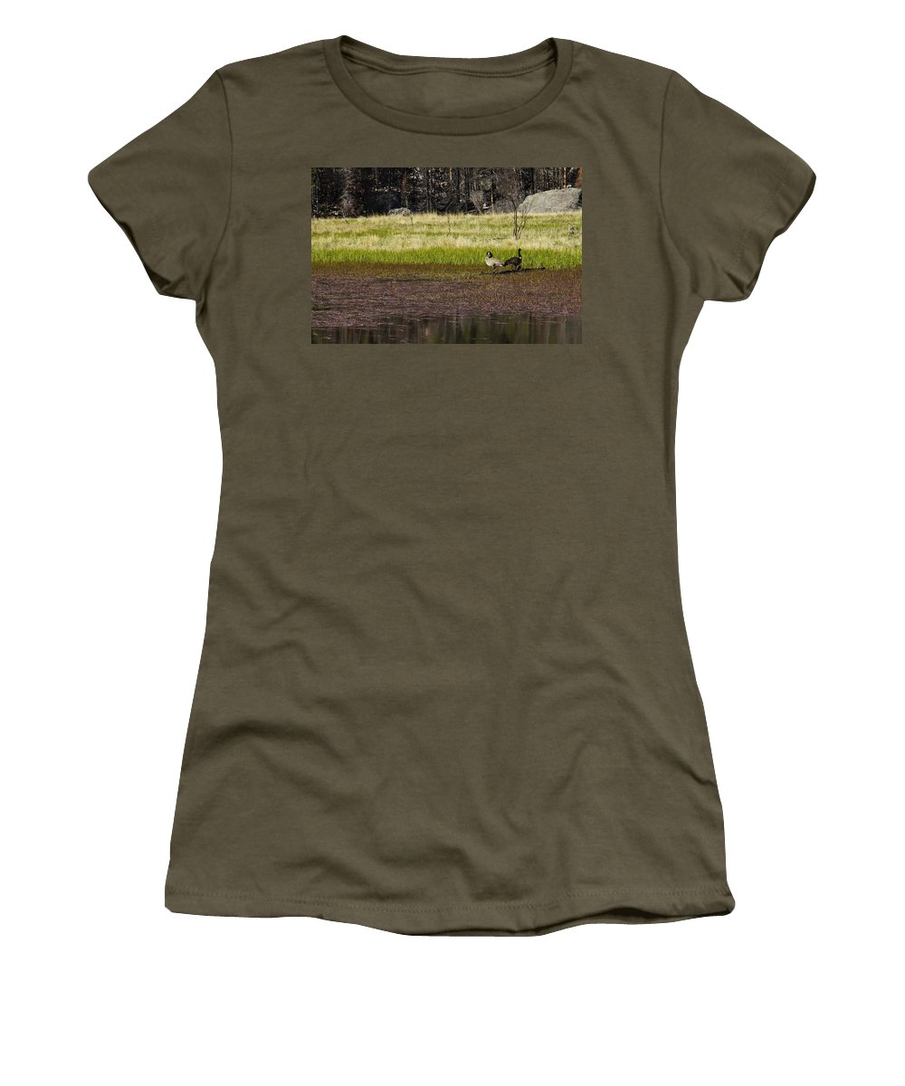 Canadian Geese Women's T-Shirt featuring the photograph Canadian Geese by Brian Kamprath