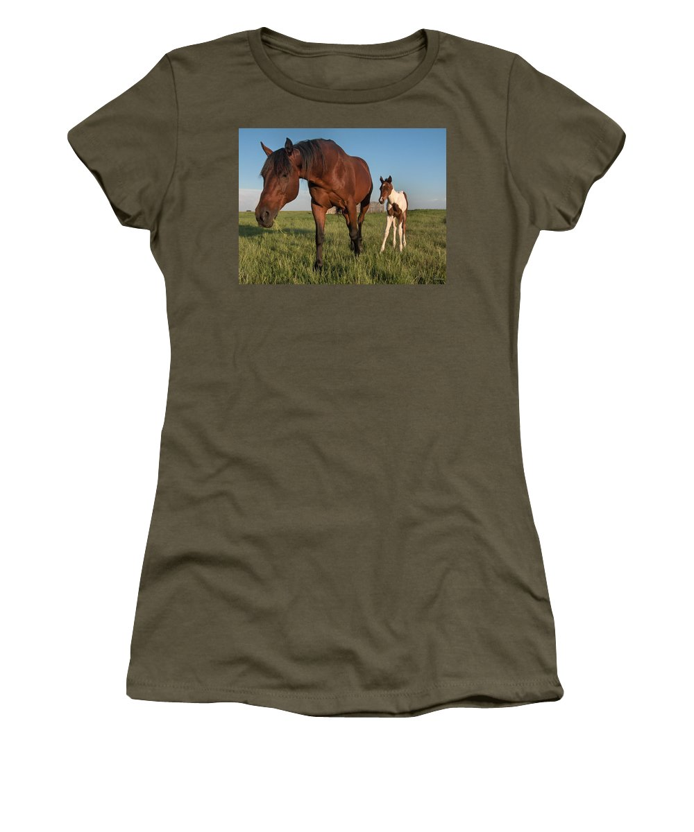 Horse Colt Baby Animals Herd Filly Ranch Farm Life Pasture Women's T-Shirt featuring the photograph Contentment by Andrea Lawrence