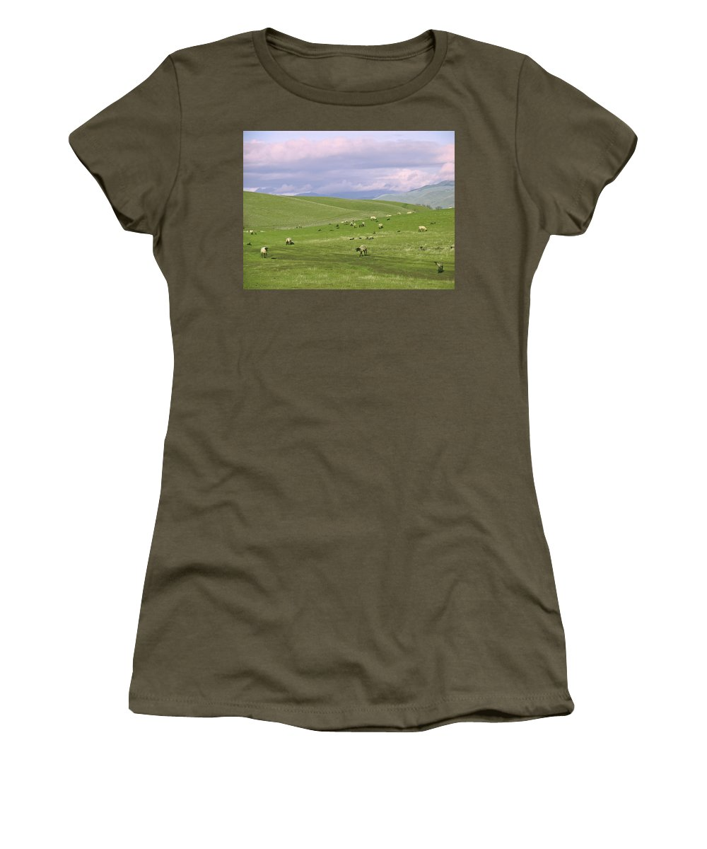 Landscape Women's T-Shirt (Athletic Fit) featuring the photograph Cross Road Sheep by Karen W Meyer
