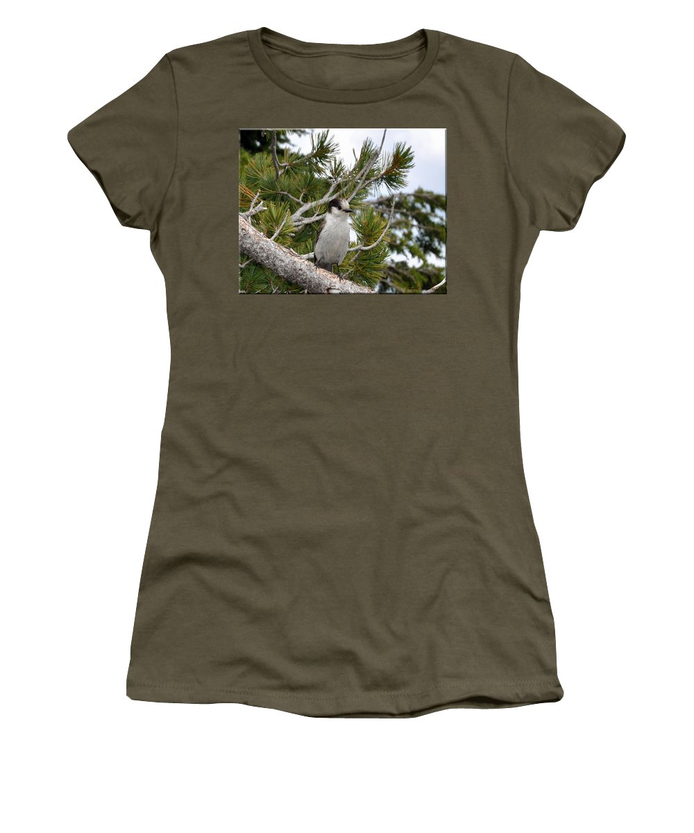 Bird Women's T-Shirt (Athletic Fit) featuring the photograph Curious by Terry Anderson