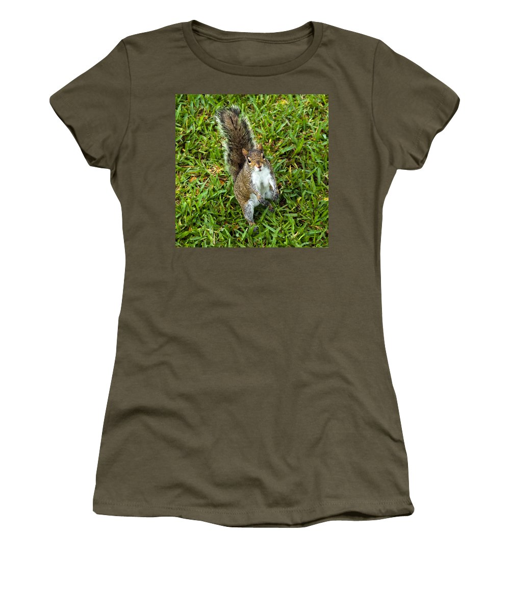 Squirrel; Eastern; Gray; Sciurus; Carolinensis; Swarm; Food; Florida; Eau; Gallie; Melbourne; Park; Women's T-Shirt (Athletic Fit) featuring the photograph Eastern Gray Squirrel by Allan Hughes