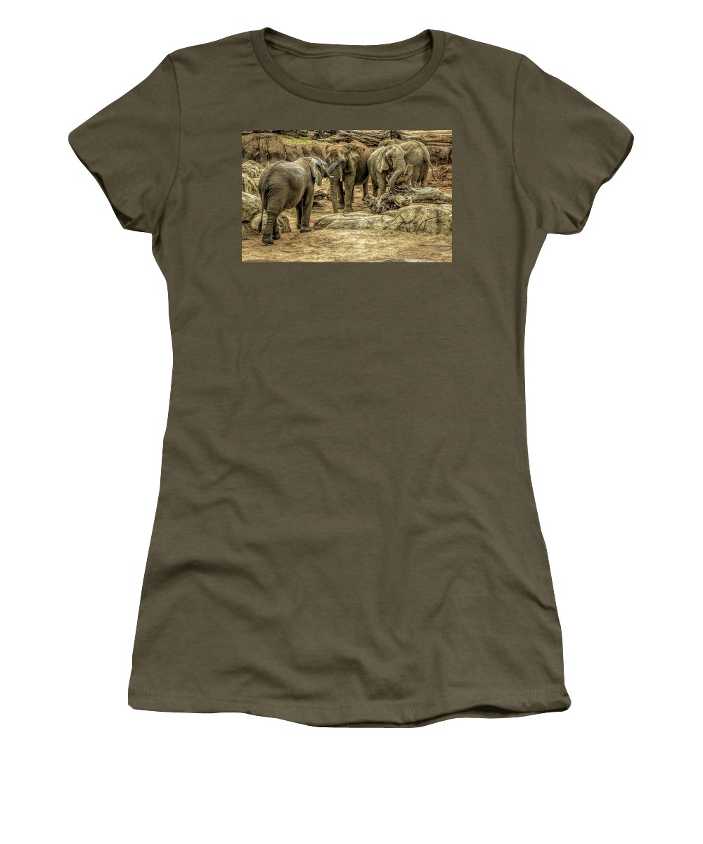 Elephants Women's T-Shirt featuring the photograph Elephants Social by David Pine