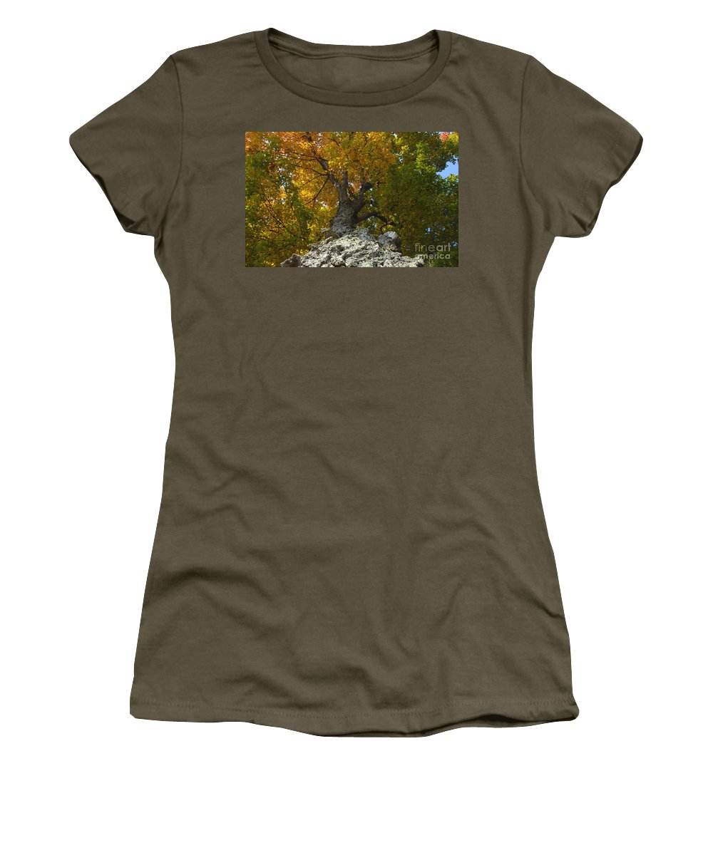 Fall Women's T-Shirt (Athletic Fit) featuring the photograph Falling Tree by David Lee Thompson
