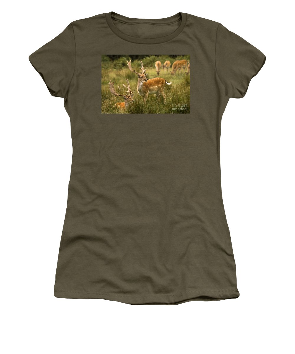Fallow Deer Women's T-Shirt (Athletic Fit) featuring the photograph Fallow Deer by Angel Tarantella