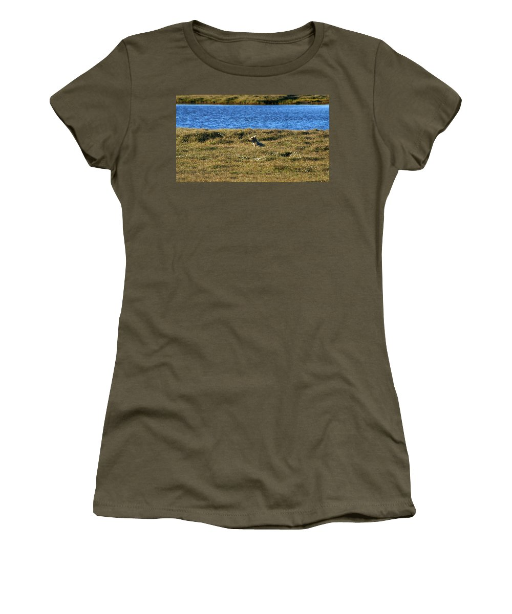 Caribou Women's T-Shirt (Athletic Fit) featuring the photograph Fawn Caribou by Anthony Jones