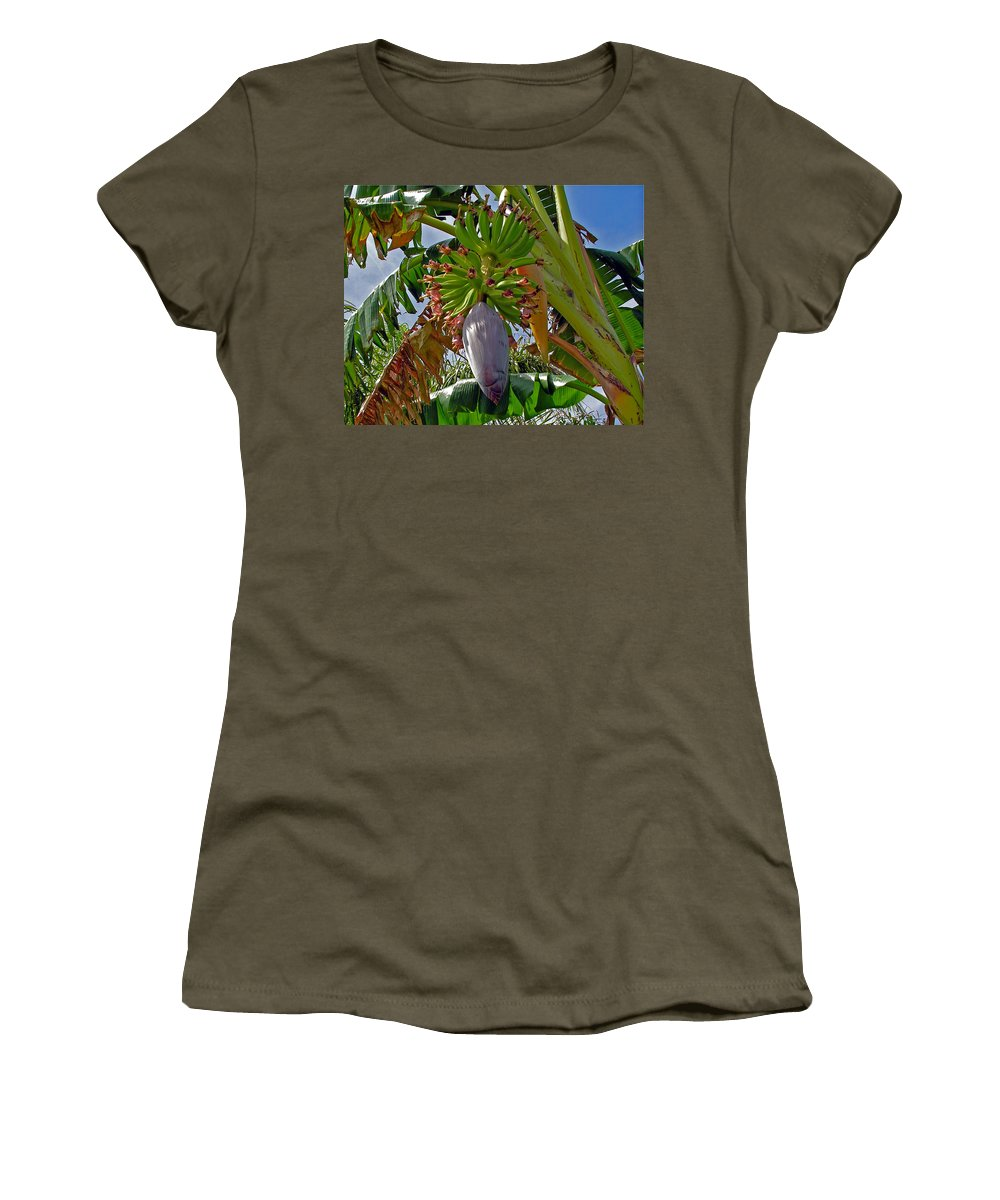 Banana; Bunch; Fruit; Flower; Tree; Stalk; Growing; Florida; Melbourne; Beach; Hand; Baby; Green; Le Women's T-Shirt featuring the photograph Florida Banana Flower And Fruit by Allan Hughes