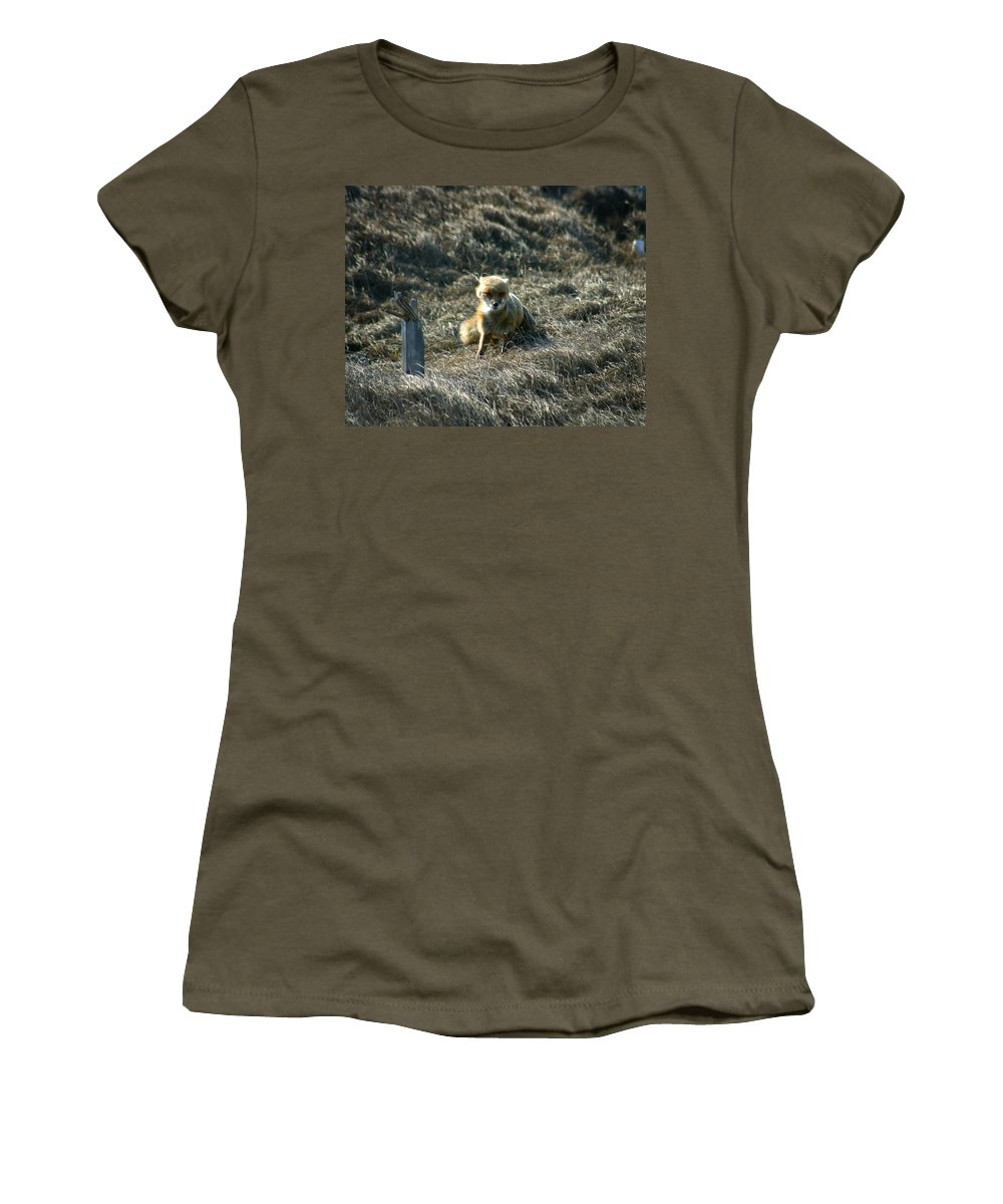 Red Fox Women's T-Shirt featuring the photograph Fox In The Wind by Anthony Jones