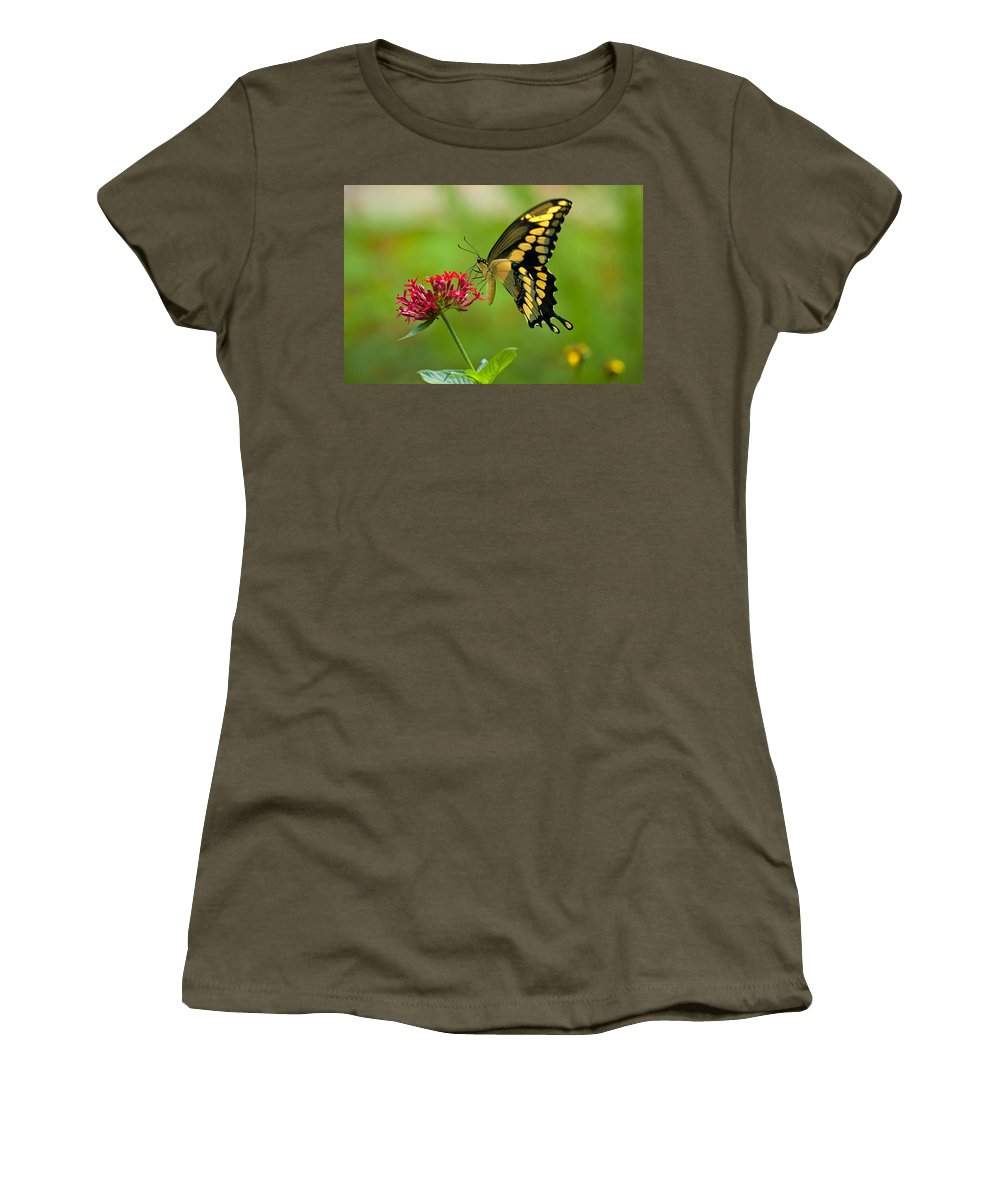Giant Swallowtail Women's T-Shirt (Athletic Fit) featuring the photograph Giant Swallowtail Butterfly by Rich Leighton