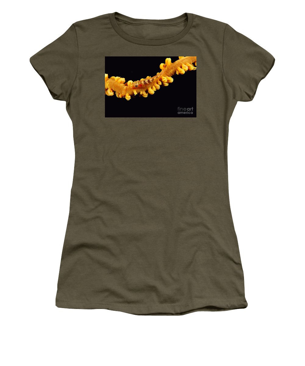Animal Art Women's T-Shirt featuring the photograph Goby by Dave Fleetham - Printscapes