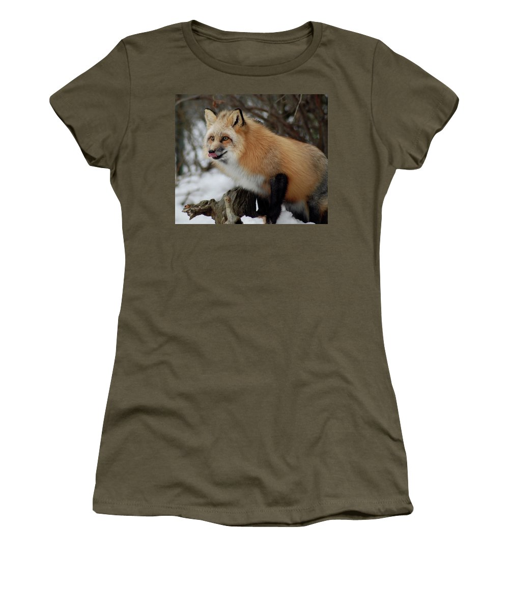 Fox Women's T-Shirt featuring the photograph Hungry Fox by Richard Bryce and Family