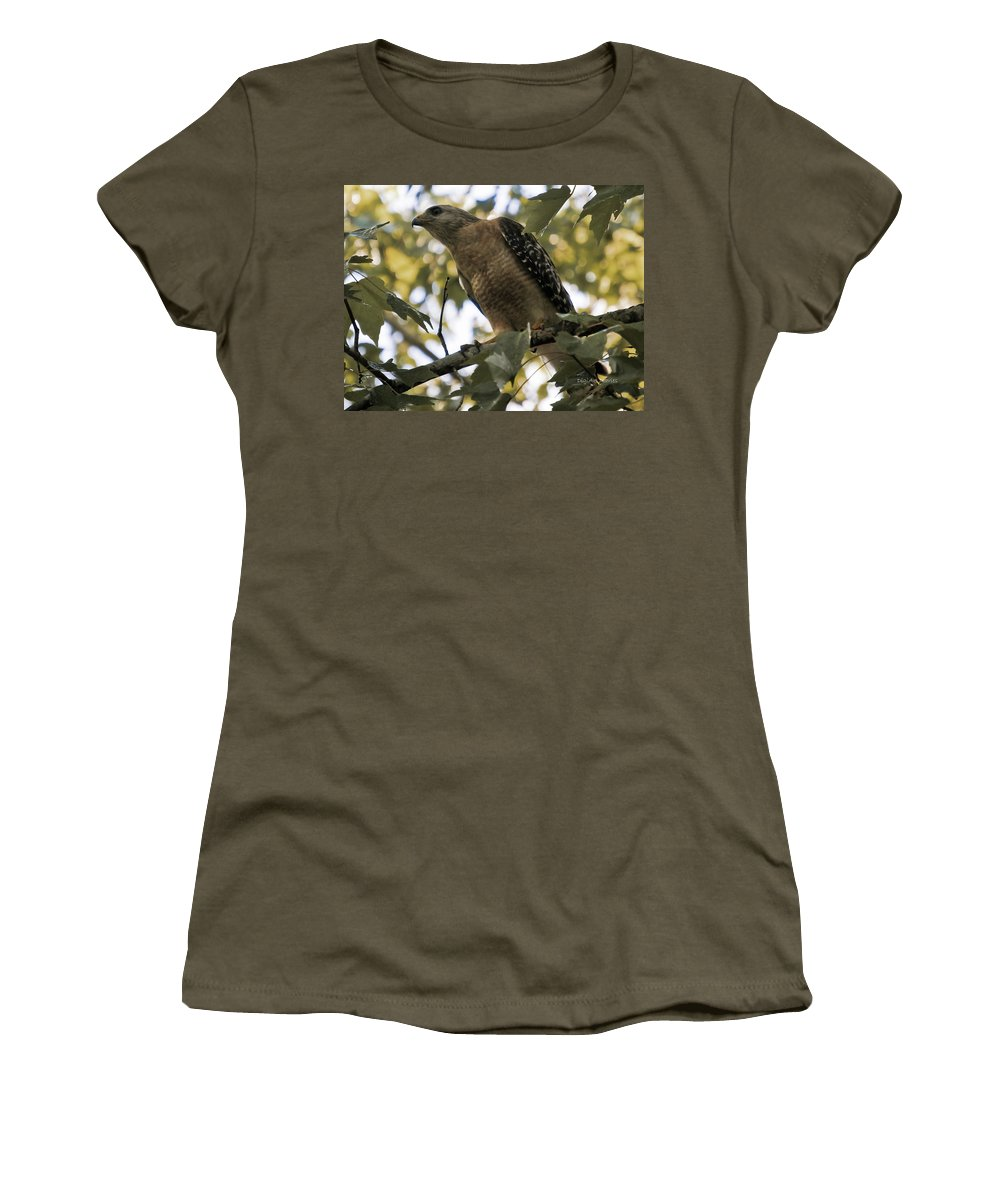 Red Shouldered Hawk Women's T-Shirt featuring the photograph Just Spotted Dinner by DigiArt Diaries by Vicky B Fuller