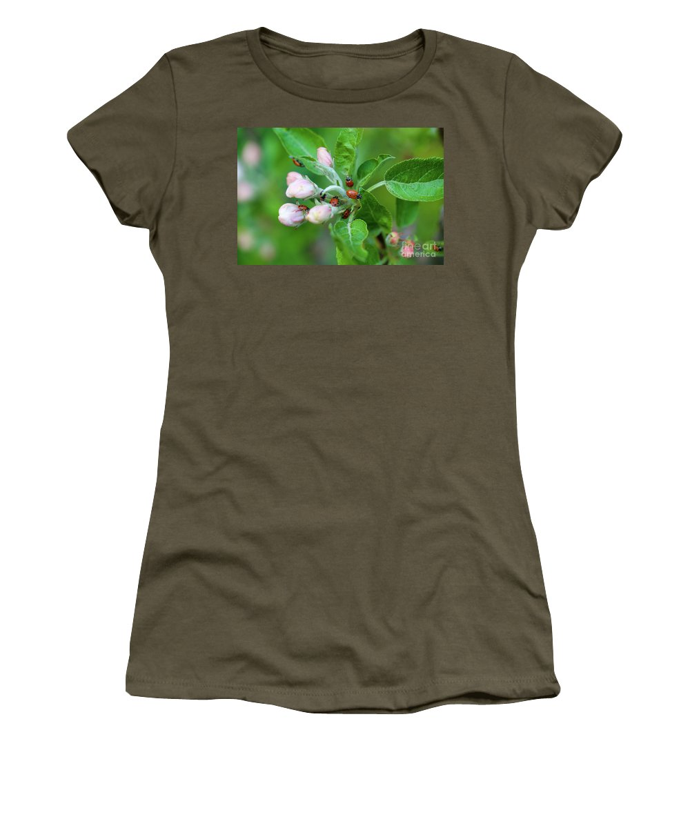 Apple Tree Women's T-Shirt (Athletic Fit) featuring the photograph Ladybugs On Apple Blossoms by Bruce Block