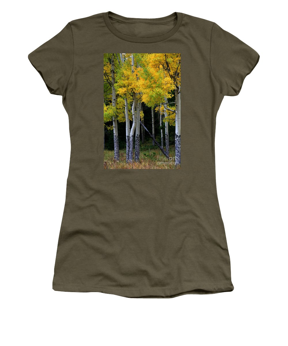 Aspens Women's T-Shirt (Athletic Fit) featuring the photograph Leaning Aspen by Timothy Johnson