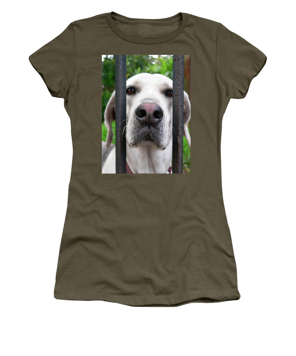 Dog Women's T-Shirt featuring the photograph Lets Go For A Walk by Angela Wright