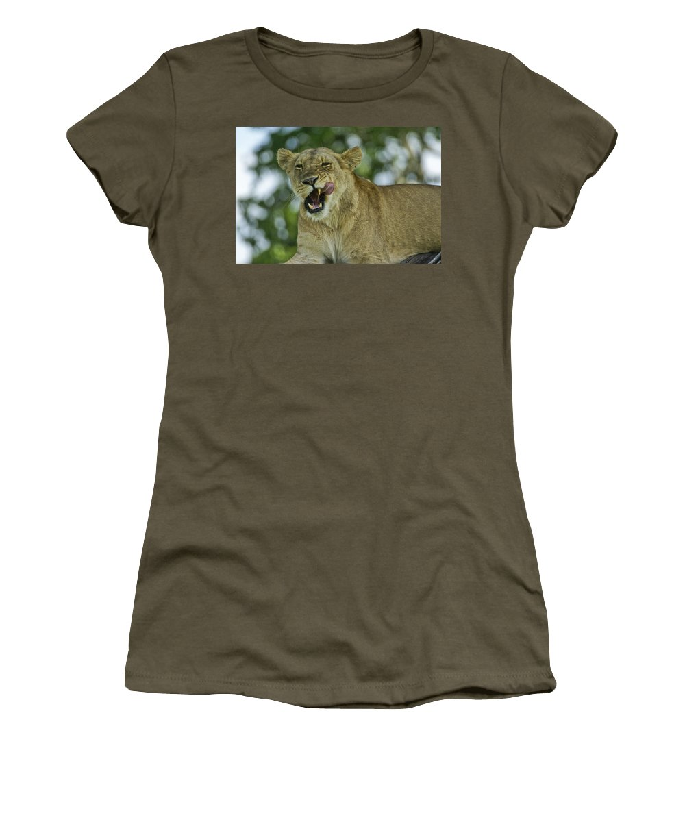 Africa Women's T-Shirt featuring the photograph Licking Lion by Michele Burgess