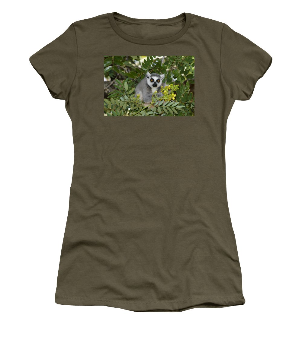 Madagascar Women's T-Shirt (Athletic Fit) featuring the photograph Little Ring-tailed Lemur by Michele Burgess