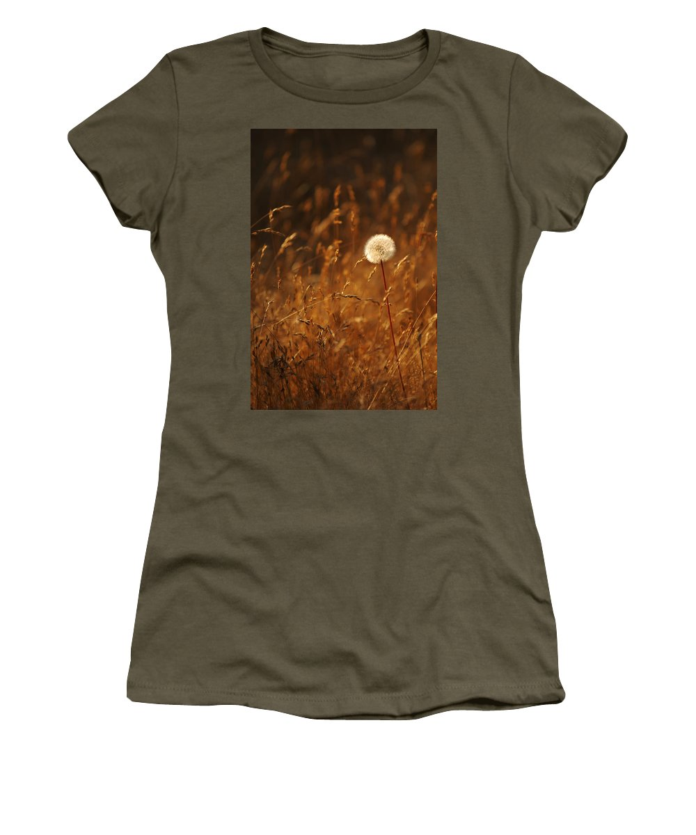 Nature Outdoors Field Dandelion Alone Single Sole Botanical Women's T-Shirt featuring the photograph Lone Dandelion by Jill Reger