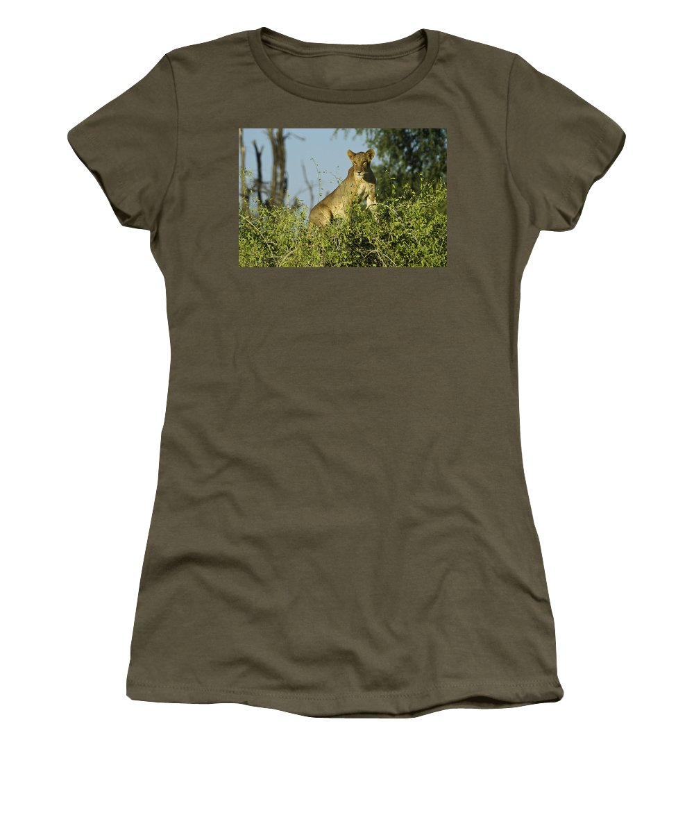 Africa Women's T-Shirt featuring the photograph Look How High I Can Climb by Michele Burgess