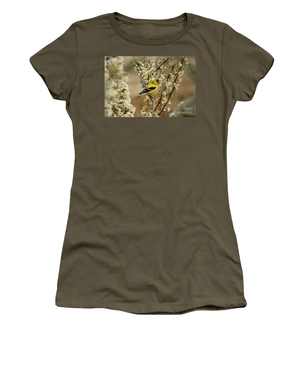 Finch Women's T-Shirt featuring the photograph Male Finch In Blossoms by Cathy Beharriell